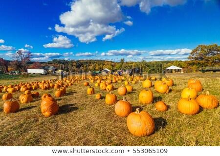Paese fienile autunno pomeriggio Vermont USA Foto d'archivio © DonLand