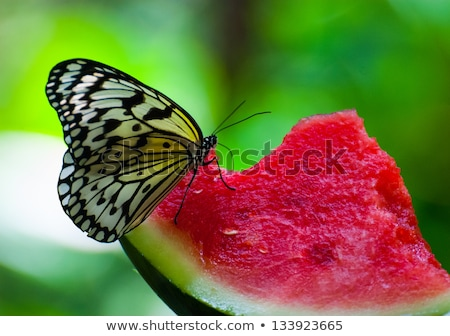 voar · inseto · fruto · figo · diariamente · luz - foto stock © witthaya