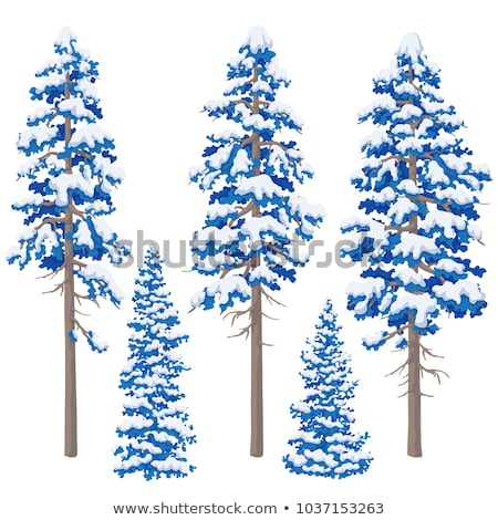 Top of a conifer in the snow Stock photo © tepic