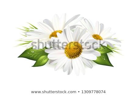 花束 ヒナギク 自然 庭園 夏 デイジーチェーン ストックフォト © adrenalina