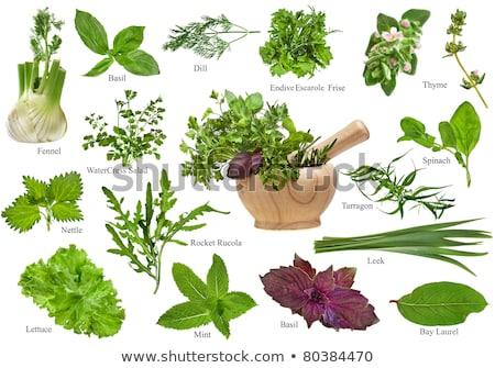 Friss gyógynövények fehér petrezselyem bazsalikom póréhagyma Stock fotó © inxti