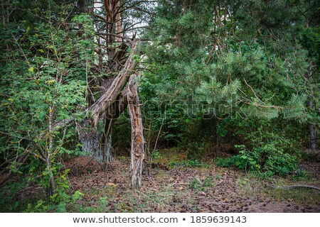 Rotten wood in a tropical forest Stock photo © Mps197
