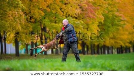Pastore belga cane autunno giardino cucciolo triste Foto d'archivio © CaptureLight