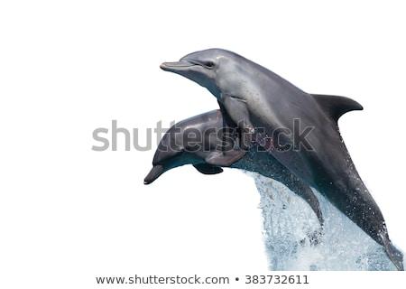 Balina yüzme beyaz örnek balık arka plan Stok fotoğraf © bluering