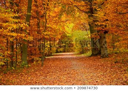 Najaar natuur tijd Denemarken kleurrijk bladeren Stockfoto © bdspn