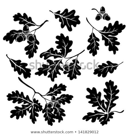 Tölgy levelek fekete skicc sziluett izolált Stock fotó © konturvid