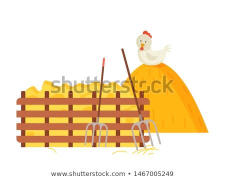 Feno fardo frango cerca Foto stock © robuart