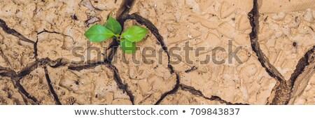 Banner boom groeiend gebarsten aarde opslaan Stockfoto © galitskaya