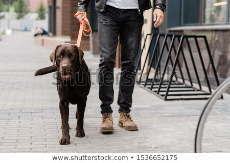 Cute brown purebred dog and his owner moving down street of the city Stock photo © pressmaster