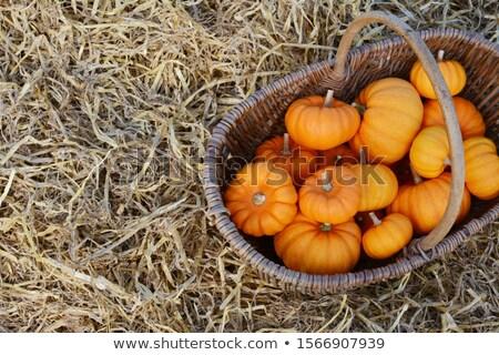 Rústico cesta colheita mini abóboras laranja Foto stock © sarahdoow