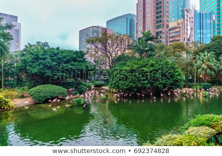 Aves rosa estanque Hong Kong parque Foto stock © galitskaya
