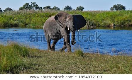 Africano paisagem reserva Namíbia África belo Foto stock © artush