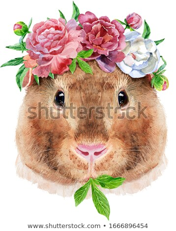 Watercolor portrait of Teddy guinea pig with flowers on white background Stock photo © Natalia_1947