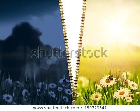 çim 3d illustration yeşil fermuar beyaz Stok fotoğraf © tashatuvango