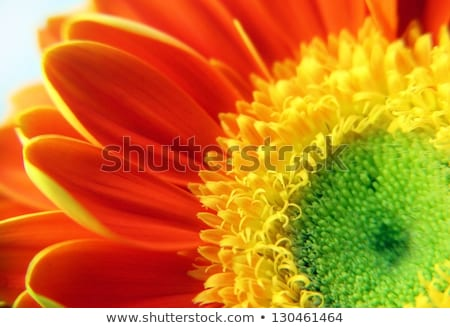 Flower Background With Color Gerbers And Leafs stock photo © adamson