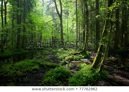 глубокий лес пути темно таинственный Сток-фото © Alvinge