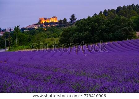 аббатство · Франция · деревне · лес · пейзаж - Сток-фото © phbcz