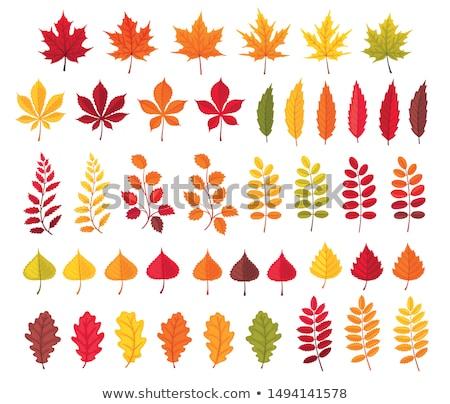 autumn colors of birch leaves stock photo © artush