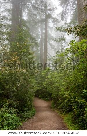misty logged forest stock photo © bendicks
