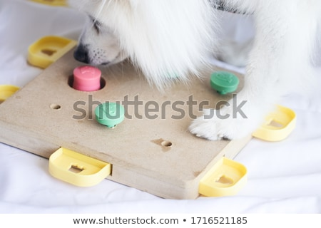 White fluffy dog Stock photo © Dazdraperma
