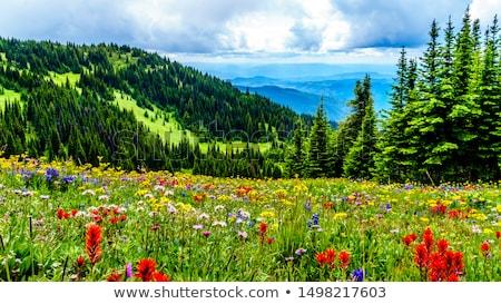 альпийский · луговой · травы · растений · лет · трава - Сток-фото © manfredxy