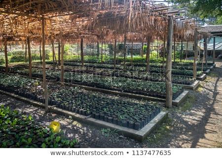 peasants in vegetable gardens in India Stock photo © Mikko