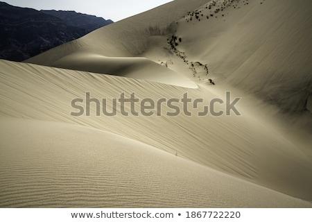 пустыне юг Марокко дерево природы африканских Сток-фото © ajlber