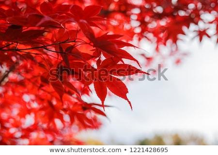 Red leaves against on sky Stock photo © vavlt