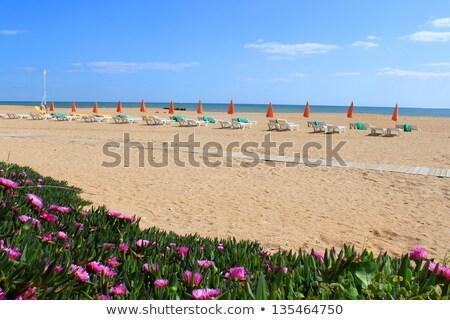 Plaj çiçekler sandalye okyanus görmek kumlu Stok fotoğraf © gvictoria