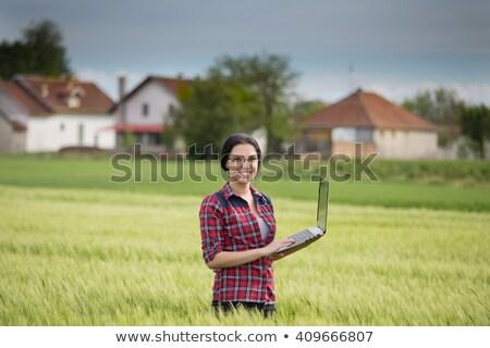 laptop wheat field stock photo © mikko