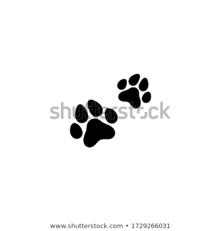 Traces of dogs Stock photo © robuart