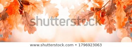 jesienią · spadek · lasu · ścieżka · czerwony · pozostawia - zdjęcia stock © maros_b