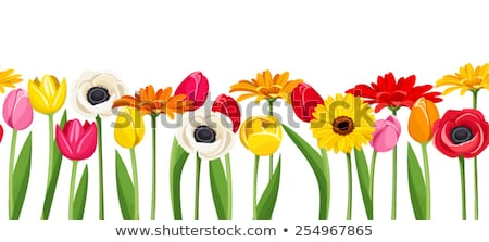 Fronteira colorido gradiente flor natureza Foto stock © adamson