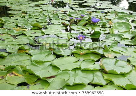 Yellow lilly reflected in rendered water Stock photo © Nejron