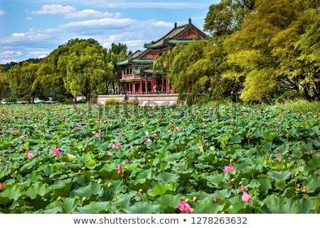 красный Lotus саду лет дворец парка Сток-фото © billperry