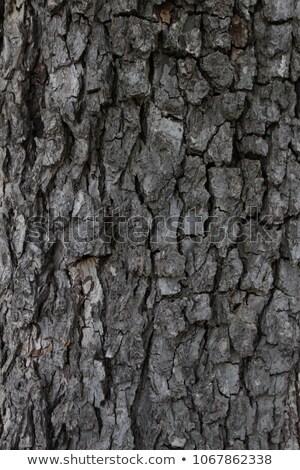 ağaç · havlama · detay · renkli · su - stok fotoğraf © AlessandroZocc