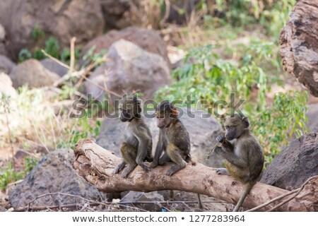 Photo stock: Bébé · jaune · babouin · séance · arbre · jeunes