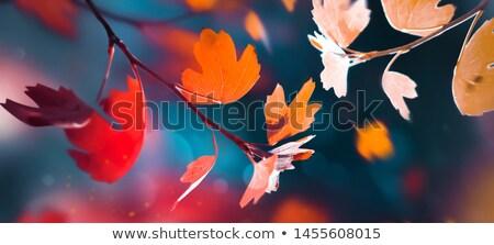 Autumn abstract, fall season background with a magic lights Stock photo © Taiga