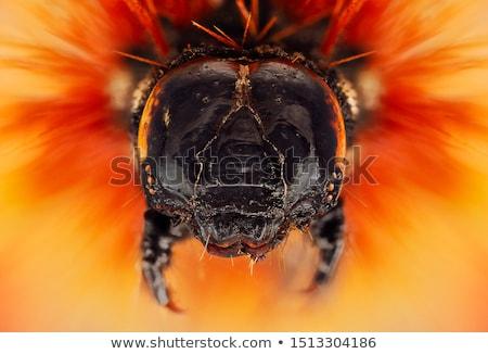 Rups vlinder insect outdoor geïsoleerd Stockfoto © mady70