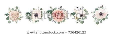 Rosa rosas folhas verdes isolado branco flor Foto stock © tetkoren