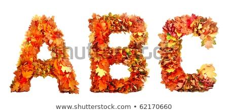 Collectie mooie kleurrijk geïsoleerd witte Stockfoto © tetkoren