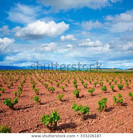 La vinha campos maneira paisagem Foto stock © lunamarina