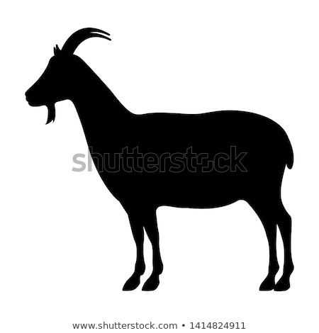 goat from profile view stock photo © derocz