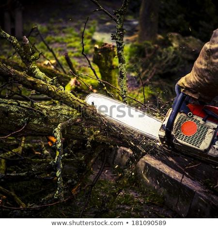 férfi · hát · narancs · fűrész · fa · erdő - stock fotó © jarin13