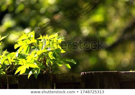 Vintage забор растений аннотация Сток-фото © viperfzk