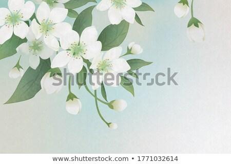 Pereira árvore flores foco Foto stock © milsiart