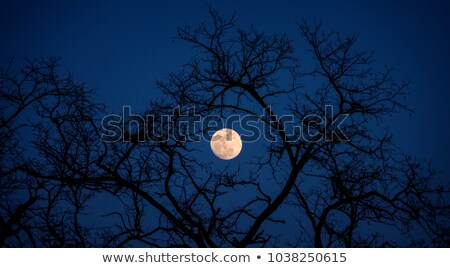 Full Moon Alignment Stock photo © bluering