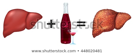 Healthy liver and alcohol get cirrhosis Stock photo © orensila