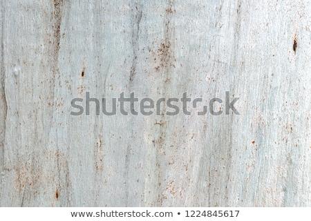 Colorido árvore casca sem costura textura madeira Foto stock © smuki