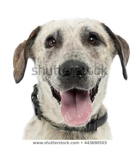 Bianco mista cane posa animale Foto d'archivio © vauvau